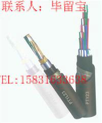 ZC-DJFPV?P22耐高温电子计算机电缆